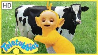 ★Teletubbies English Episodes★ Milking Cows ★ Full Episode   HD (S06E136)