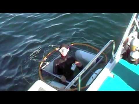 Grote witte Haai in Zuid Afrika 2003