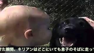getlinkyoutube.com-愛犬がベビーシッターの虐待から息子を守る!