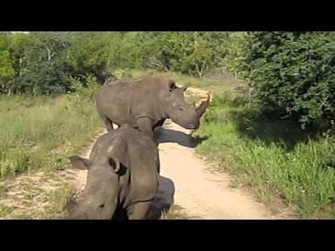 Jessie's Journeys – South Africa – Rhinos