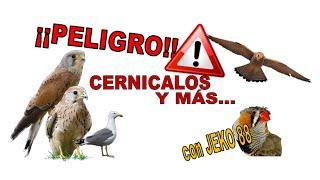 getlinkyoutube.com-COMO PROTEGERNOS DEL CERNICALO