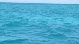 getlinkyoutube.com-Dolphins off Fumba