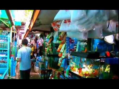 熱帯魚・金魚ショップ pasar ikan hias @ Jakarta