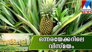 getlinkyoutube.com-A perfect farming model all the way from Muvattupuzha-Nattupacha| Manorama News