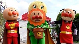 getlinkyoutube.com-アンパンマンショー 【みんなでさがそう!ゆめの花】 3人のアンパンマンにばいきんまん、ドキンちゃん登場!  最前列高画質 Anpanman kidsshow