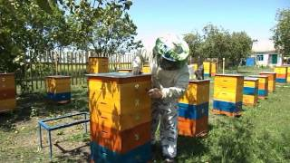 getlinkyoutube.com-УДАЛИТЕЛЬ ПЧЁЛ ИЗ ТРУБКИ . REMOVER bees out of the tube.