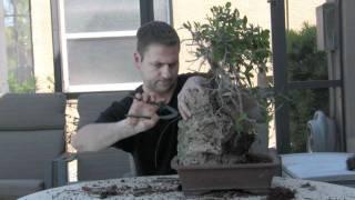 getlinkyoutube.com-How To Bonsai - Create Root Over Rock