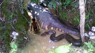 getlinkyoutube.com-Top 5 Biggest Snakes In The World