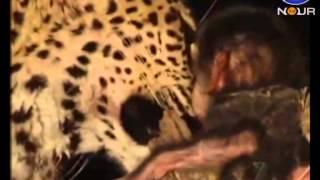 getlinkyoutube.com-مهربانی عجیب حیوانات وحشی در هنگام شکار - عجیب ولی واقعی