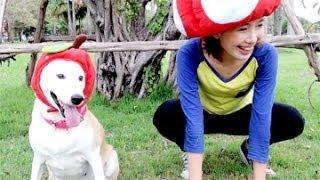 getlinkyoutube.com-ขำกลิ้งซอฟกับหมา(กลูต้า)
