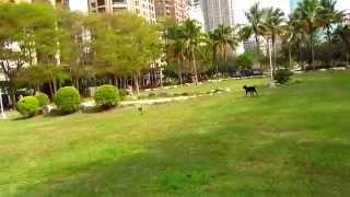 getlinkyoutube.com-V120D02G & Dogs