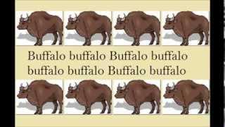 Buffalo Buffalo Buffalo ¦ Why The English Language Is Complicated