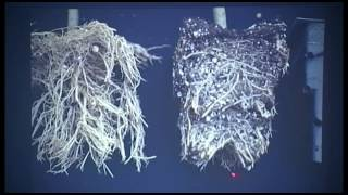 getlinkyoutube.com-Dr. Carl Whitcomb, Improving Plant Root Systems