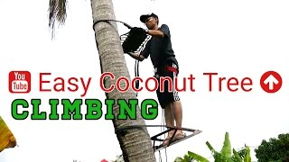 getlinkyoutube.com-Tree Climbing Techniques Tutorial | How To Climb Tree