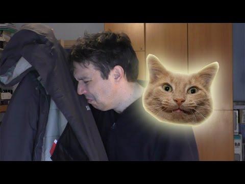 Come togliere odore pipi gatto dal divano