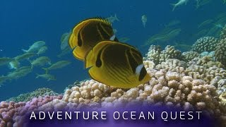 getlinkyoutube.com-► Adventure Ocean Quest - 24 Hours on the Reef (FULL Documentary)