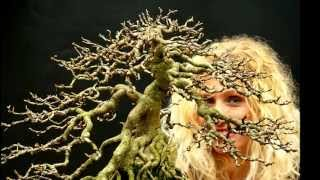 getlinkyoutube.com-SandevBonsai - Remaking of my Hedera tree