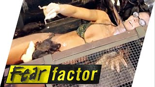 getlinkyoutube.com-Glamour Queen V Rats | Fear Factor Extra