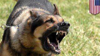 """getlinkyoutube.com-""""เมาแล้วเห่า"""" ชายขี้เมาขู่สุนัขตำรวจ อาจติดคุกเจ็ดปี"""