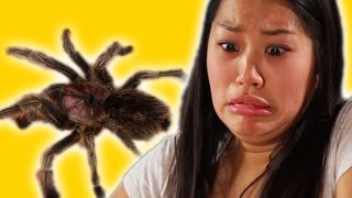 getlinkyoutube.com-Arachnophobes Meet Spiders