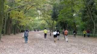 getlinkyoutube.com-【4K撮影】秋の京都【下鴨神社】 紅葉 2014-11-15