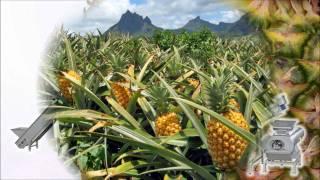 getlinkyoutube.com-Pineapple juice extraction