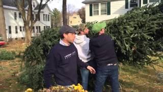 Third Annual Casimo Christmas Tree Transplanting
