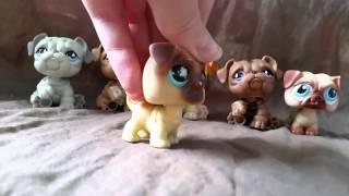 "getlinkyoutube.com-LPS: ""Zakręceni"" #43 Littlest Pet Shop !"