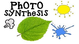 Photosynthesis for Kids - How plants make food - Animation Science