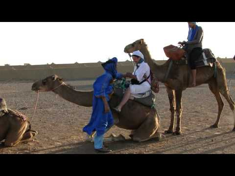 Getting The Camels to Sit Down – Sahara Desert