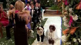 getlinkyoutube.com-Dog With A Blog - Stan's Weddings