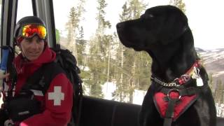 getlinkyoutube.com-Adolescent Avys: The Dogs of Vail Mountain