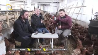 getlinkyoutube.com-Kanatlı Alemi-Tavuk Yetiştiriciliğinde Maliyetler Nelerdir?