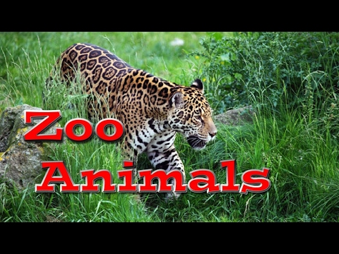 Animal World: Zoo Animals for Kids