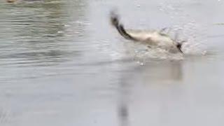 getlinkyoutube.com-วิธีส่งสาย กบยางตกปลาช่อน