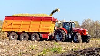 getlinkyoutube.com-Mais hakselen Mart Munsters Deurne | KRONE BIGX 700 Massey Ferguson 8470 7495 Veenhuis USA Equipment