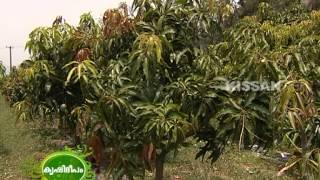getlinkyoutube.com-Hi-Tech farming of fruit crops like Mango,Cashew,Pomegranate,Guava,Gooseberry in open field