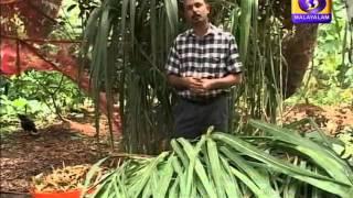 getlinkyoutube.com-Krishidarshan Malayalam 30-09-2015