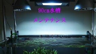 getlinkyoutube.com-90cm水槽の水換え