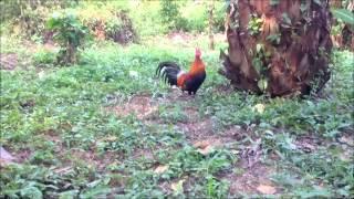 getlinkyoutube.com-วิธีการปักครืนต่อไก่ ครืนผีเสื้อ โดยวิธีการปักล้อมครึ่งวงกลม