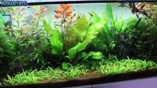 getlinkyoutube.com-Como eliminar algas con Agua Oxigenada || AquaTips