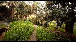 #لقطة | سلطنة عمان - مسفاة العبريين - ولاية الحمراء |Oman -Misfat AlAbreen - alhamra