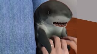 getlinkyoutube.com-Shark toy playing on the hardwood
