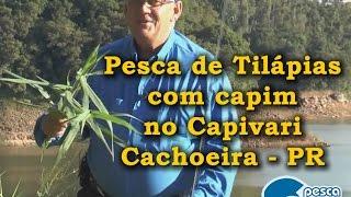 getlinkyoutube.com-Pesca de Tilápias com capim no Capivari Cachoeira - PR
