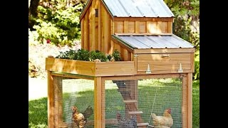 getlinkyoutube.com-How to raise healthy backyard chickens and get their food for free!