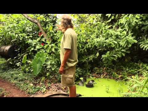 Permaculture 2015 Permaculture Food Forest at Pupukea Hawaii