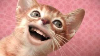 getlinkyoutube.com-Singing Cats