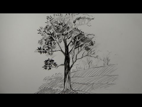 How to draw a tree using pencil (a simple tree)