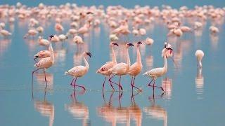 getlinkyoutube.com-Bolivia's Salar De Uyuni & Chile's Wildlife Wonders in 4K | Nature Relaxation™ Experience