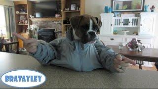 getlinkyoutube.com-Dog with Arms (WK 190) | Bratayley